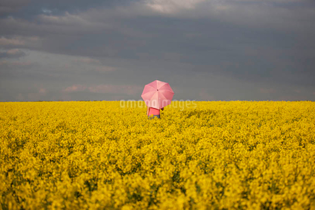 A young woman standing in a rape seed field holding a pink umbrellaの写真素材 [FYI02122459]