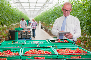Businessman Supervises Commercial Indoor Tomato Productionの写真素材 [FYI02123803]