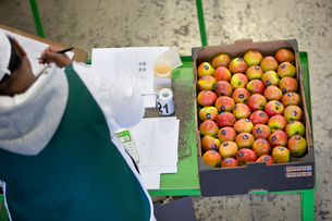 Workers Packing Apples Into Boxes In Fruit Processing Plantの写真素材 [FYI02124088]