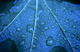 Close-up of a leaf floating on waterの写真素材 [FYI02125621]
