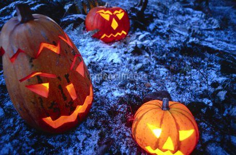High angle view of jack-o-lanterns in a forestの写真素材 [FYI02126745]