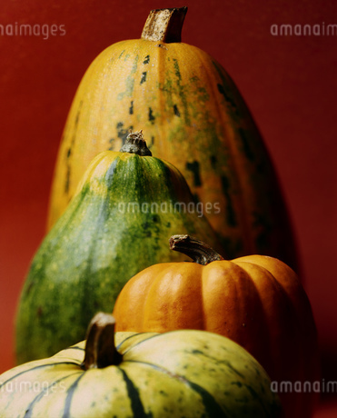 Still life view of a bunch of different colored pumpkinsの写真素材 [FYI02127016]