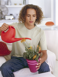 View of young man watering dead flowerの写真素材 [FYI02127426]