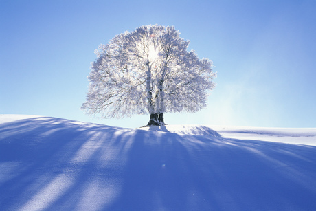 Silhouette of glazed frost on a tree, Upper Bavaria, Germanyの写真素材 [FYI02127914]