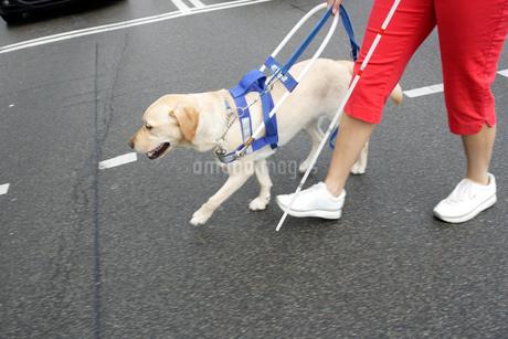 Blind woman and seeing eye dog crossing streetの写真素材 [FYI02128102]