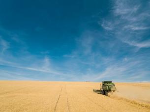 Harvest aerial of combine harvester cutting summer barley field crop under blue sky on farmの写真素材 [FYI02128302]