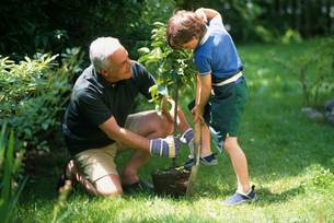 Grandfather and grandson planting a treeの写真素材 [FYI02128346]