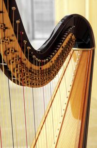 Close up of harpの写真素材 [FYI02128509]