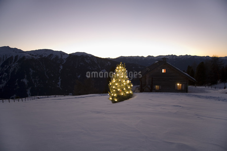 Chalet and Christmas tree at night, Luesener Alm, Dolomite Alps, South Tyrol, Italyの写真素材 [FYI02128520]