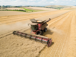 Harvest aerial overhead of combine harvester cutting summer wheat field crop on farmの写真素材 [FYI02129114]