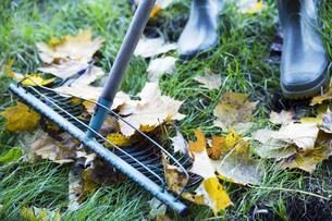 Person raking leaves in autumnの写真素材 [FYI02129175]