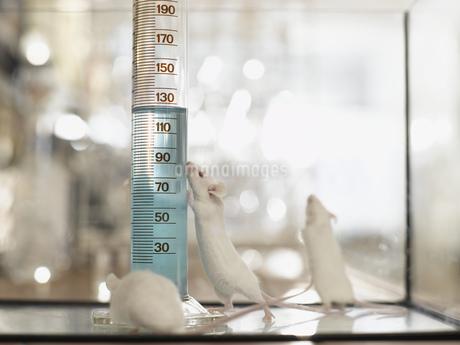 Laboratory mice next to vial with liquidの写真素材 [FYI02129193]