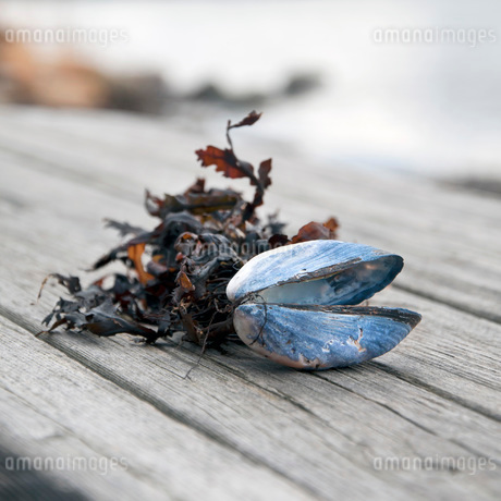 Shell and dried leaves on woodの写真素材 [FYI02129251]