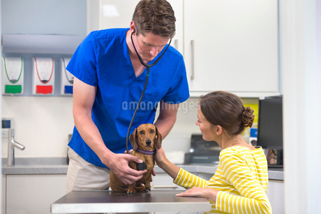 Vet examining pet dog with stethoscope on table in vet surgery with ownerの写真素材 [FYI02129484]