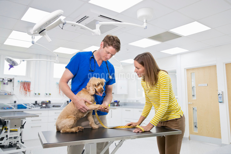 Vet examining pet dog on table in surgery with ownerの写真素材 [FYI02129819]