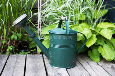 Watering can on wooden plank with plants in backgroundの写真素材 [FYI02129877]