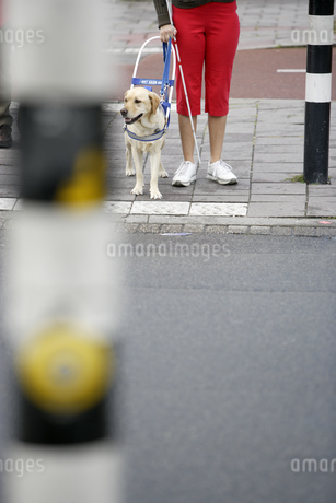 Blind woman and seeing eye dog waiting to cross streetの写真素材 [FYI02129880]
