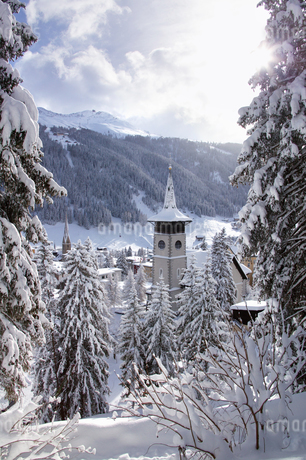 Low angle view of snow-covered fir trees, Davos, Graubuenden, Switzerlandの写真素材 [FYI02129898]