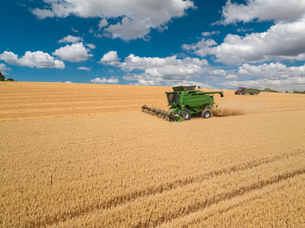 Harvest aerial of combine harvester cutting summer oats field crop under blue sky on farmの写真素材 [FYI02130145]