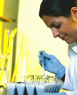 Female bio-tech researcherの写真素材 [FYI02130147]