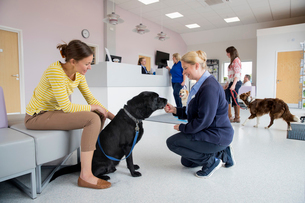 Pet dog owner with nurse in vet surgery waiting room receptionの写真素材 [FYI02130232]
