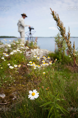 Photographer in field of Oxeye daisies by lakeの写真素材 [FYI02130281]