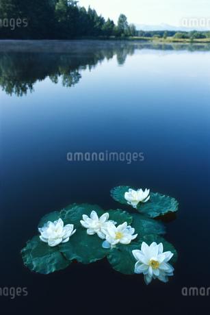 Lake in Bavaria, Germanyの写真素材 [FYI02130367]