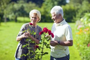 Senior couple tending to rose bushの写真素材 [FYI02130396]