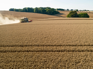 Harvest aerial combine harvester and summer wheat field farm cropの写真素材 [FYI02130571]