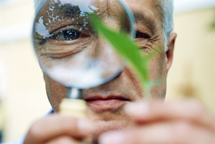 Man looking at a leaf with a magnifying glassの写真素材 [FYI02130638]