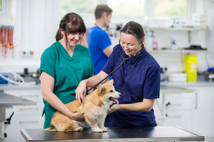 Vet examining pet dog with stethoscope on table in vet surgeryの写真素材 [FYI02130757]
