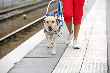 Blind woman and seeing eye dog at train stationの写真素材 [FYI02131013]
