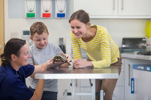 Child owner of pet tortoise on examination table with vet in surgery with parentの写真素材 [FYI02131125]