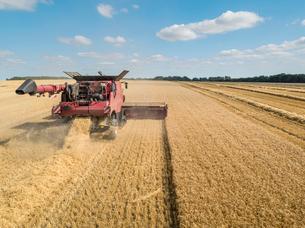 Harvest aerial of combine harvester cutting summer barley field crop under blue sky on farmの写真素材 [FYI02131275]