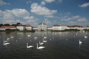 Swans in water in Germanyの写真素材 [FYI02131284]