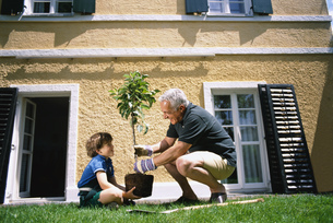 Side view of grandfather and grandson planting a treeの写真素材 [FYI02131308]