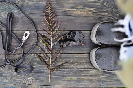Belt, leaves and shoes on wooden planksの写真素材 [FYI02131361]
