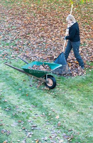 Senior woman raking Autumn leaves in gardenの写真素材 [FYI02131426]