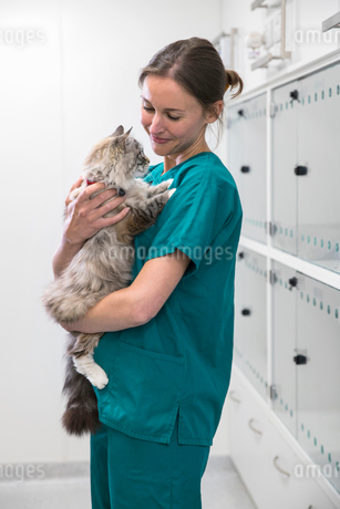 Nurse holding pet cat in recovery room of vet surgeryの写真素材 [FYI02131437]