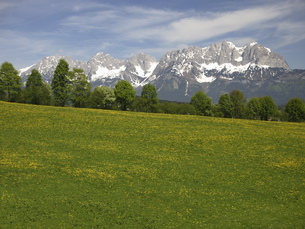 Scenic view of meadow and mountains, Kaisergebirge, Tyrol, Austriaの写真素材 [FYI02131439]