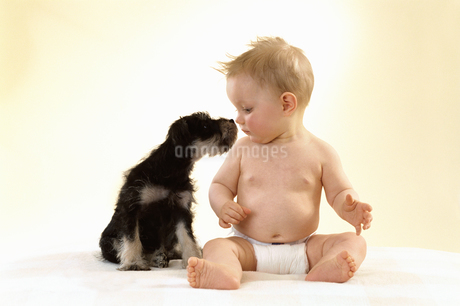 Portrait of baby and puppyの写真素材 [FYI02131465]