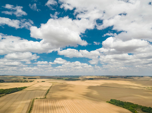 Farm harvest wheat fields aerial landscape and summer blue sky with fluffy white cloudsの写真素材 [FYI02131520]