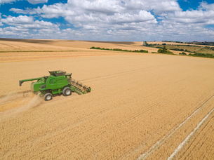 Harvest aerial of combine harvester cutting summer oats field crop under blue sky on farmの写真素材 [FYI02131626]
