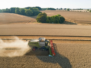 Harvest aerial combine harvester and summer wheat field farm cropの写真素材 [FYI02131763]