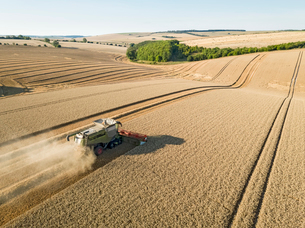 Harvest aerial landscape of combine harvester and summer wheat field farm cropの写真素材 [FYI02131815]