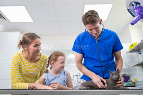 Vet examining pet cat on table in surgery with child owner and parent motherの写真素材 [FYI02131832]