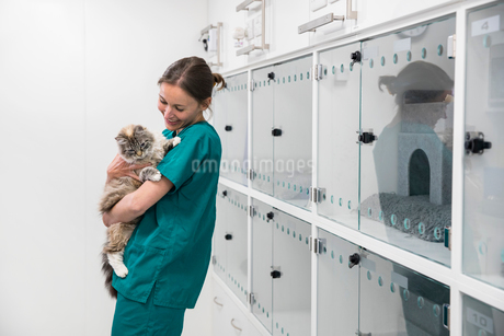 Nurse holding pet cat in recovery room of vet surgeryの写真素材 [FYI02131837]