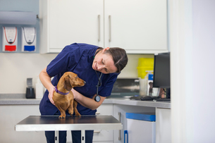 Vet examining pet dog on table in consulting room in surgeryの写真素材 [FYI02131841]