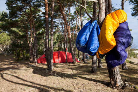 Camping equipment hanging on tree trunk in forestの写真素材 [FYI02134489]