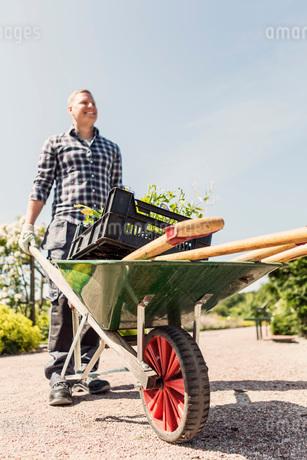Low angle view of man holding wheelbarrow at community gardenの写真素材 [FYI02136713]